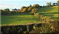 SX9269 : Sheep pasture near Lower Gabwell by Derek Harper
