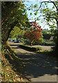 SX9166 : Acer, Clennon Lane by Derek Harper