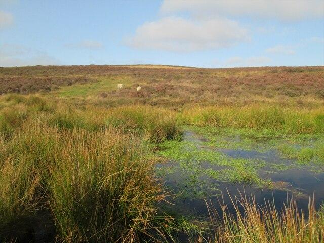 Seavy  Pond.  Levisham  Moor