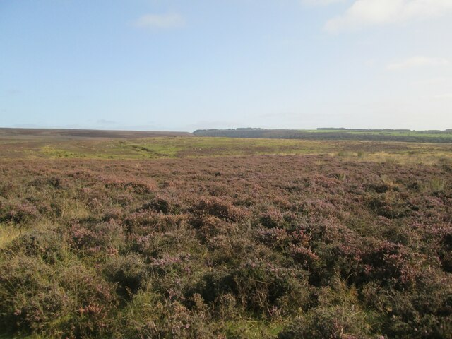 View  over  Levisham  Moor  and  Hole  of  Horcum