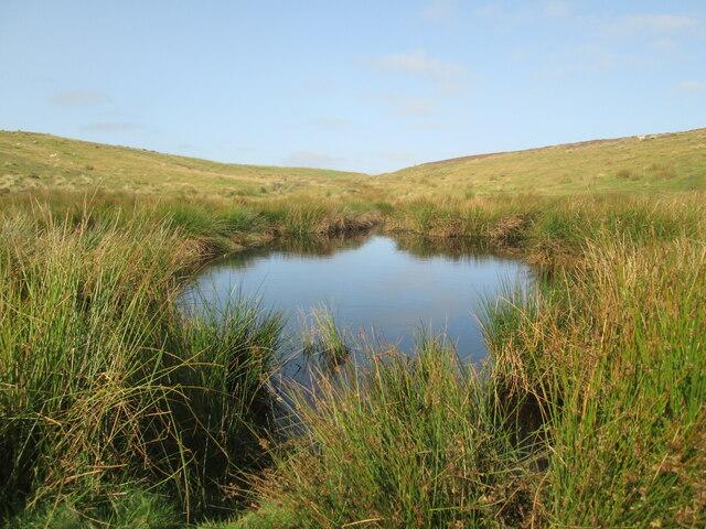 Dundale  Pond  near  Levisham