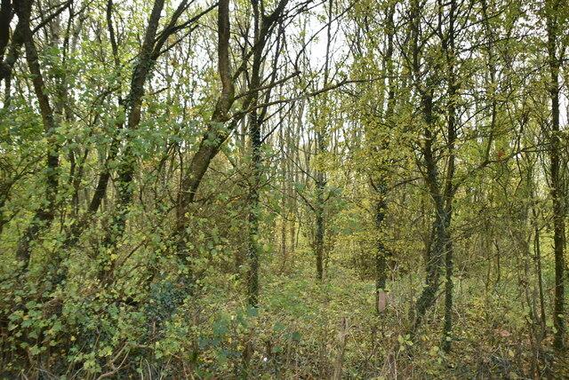 Woodland by Munday Bois Rd