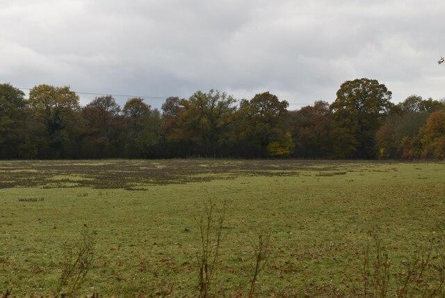 Field near Munday Bois