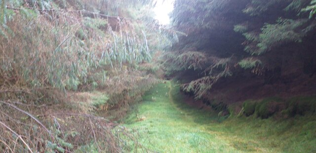 Track below Mill Scar