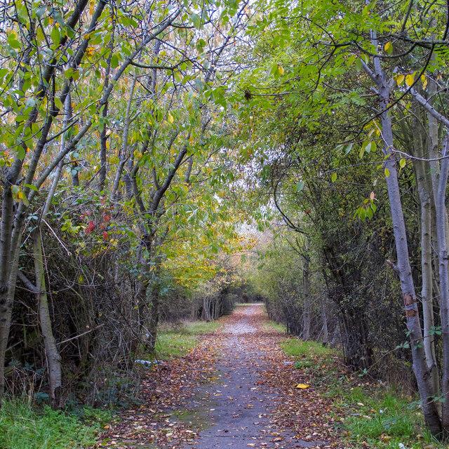 Tree lined footpath near Putwell Bridge Farm, Brentwood