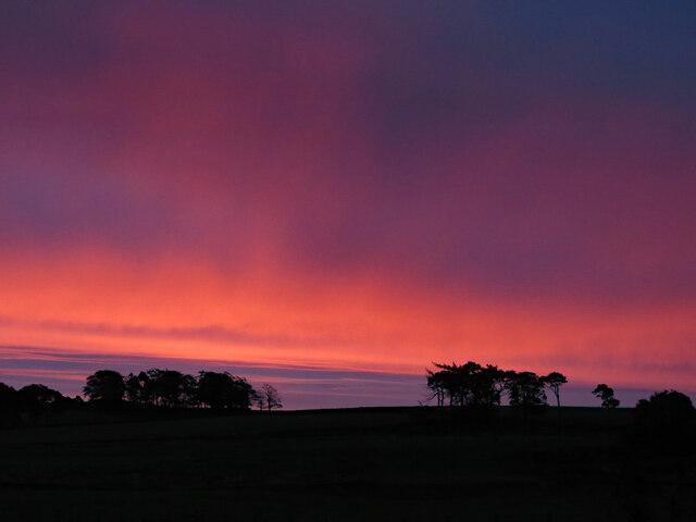 Dawn over woodland near The Spittal