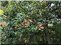 TF0820 : Adding autumn colour to the oaks by Bob Harvey