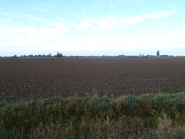 Flat fenland field