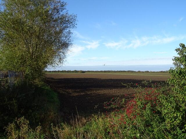 Flat farmland, Ash Tree Farm