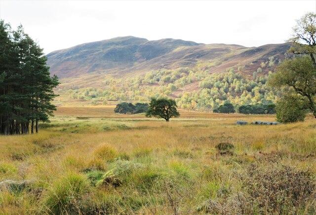 A view up the glen by Gordon Hatton