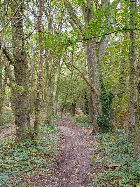 Path in Warley Gap