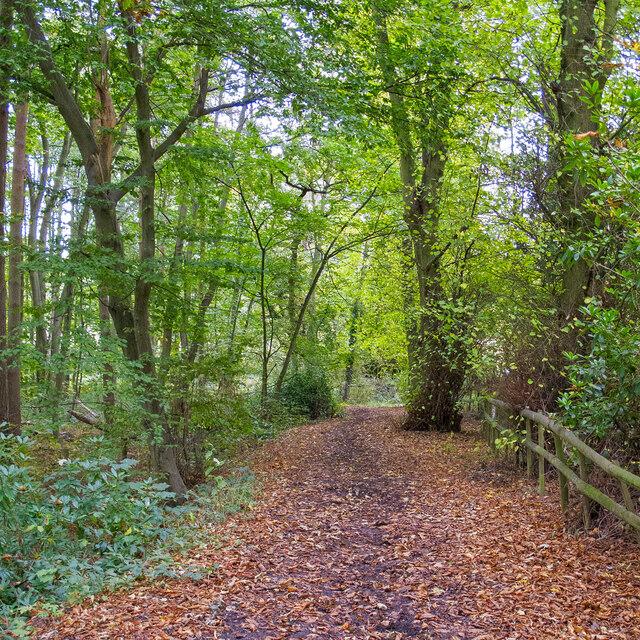 Bridleway in Lower Belt Wood, Warley