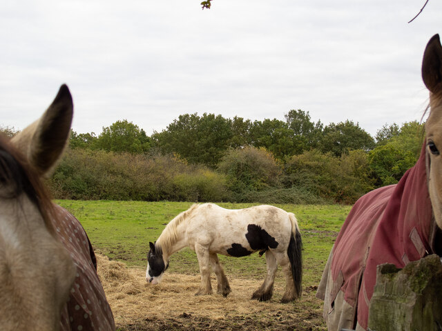 Horses in field near Nags Head Lane, Brentwood