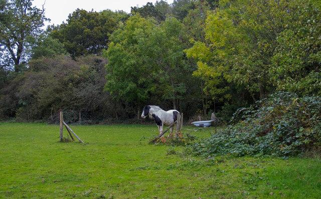 Horse in field near Bird Lane, Cranham