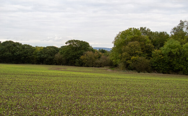 Unmarked footpath over arable land, Cranham