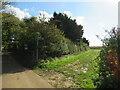 SZ5185 : Public bridleway near Newport by Malc McDonald