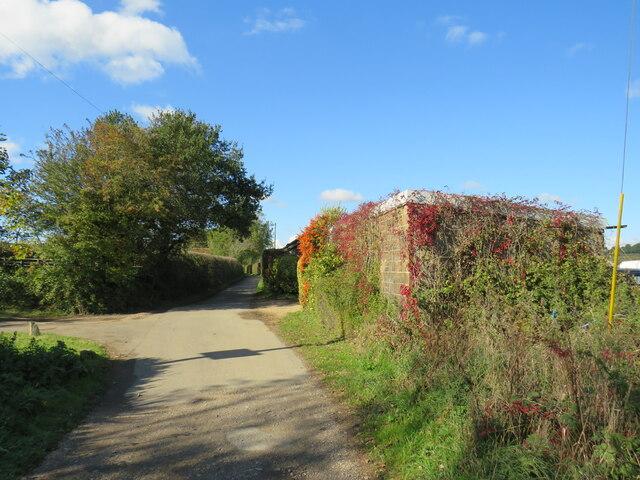 Red Squirrel and Stenbury Trail near Newport