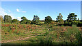 SO8074 : Heathland on the Devil's Spittleful Nature Reserve in Worcestershire by Roger  Kidd