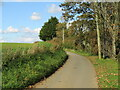 SZ5384 : Budbridge Lane near Merstone by Malc McDonald