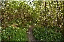 TQ6143 : Footpath, Pembury Walks by N Chadwick