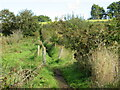 SZ5282 : Public footpath near Godshill by Malc McDonald