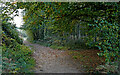 SO8074 : Bridleway to Blackstone near Bewdley, Worcestershire by Roger  Kidd