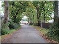 SZ5192 : Folly Lane, near Whippingham by Malc McDonald