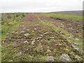 SE8098 : Wheeldale Moor Roman Road by T  Eyre