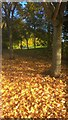TF1604 : Autumn leaves on Hodgson Avenue, Werrington by Paul Bryan