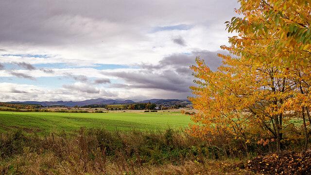 Farmland near Alcaig, Black Isle