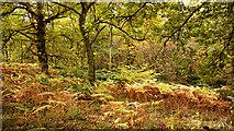 NH5857 : Inside Drummondreach Oak Wood SSSI by Julian Paren