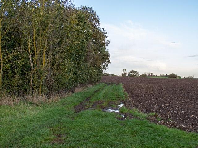 Tilled field near Great Warley Hall