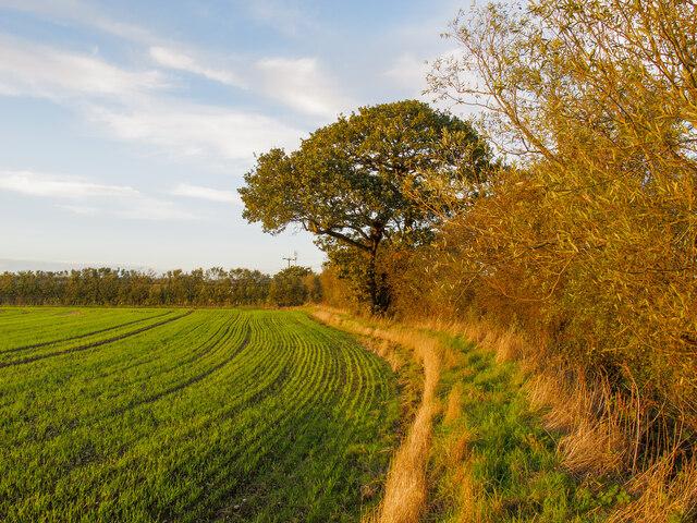 Footpath on field boundary, near St Marys Lane, Upminster