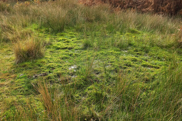 Bog by Holne Moor Leat