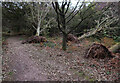TG0942 : Fallen trees on Kelling Heath by Hugh Venables