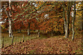 NC4602 : Autumn Leaves on the Footpath at Achness, Sutherland by Andrew Tryon