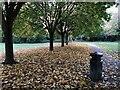 SK5034 : Fallen leaves by David Lally