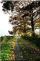 NY5345 : Bascodyke track by Andy Waddington