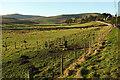 NT9716 : Fields at Hartside by Derek Harper