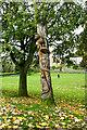 NZ1908 : Carved tree stump by Andy Waddington