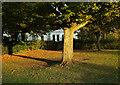 SX9265 : Cherry tree, Cary Park by Derek Harper