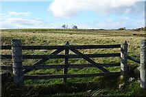 NJ5145 : Field Gate by Anne Burgess