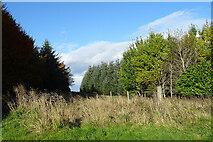 NJ5144 : Grassy Path by Anne Burgess