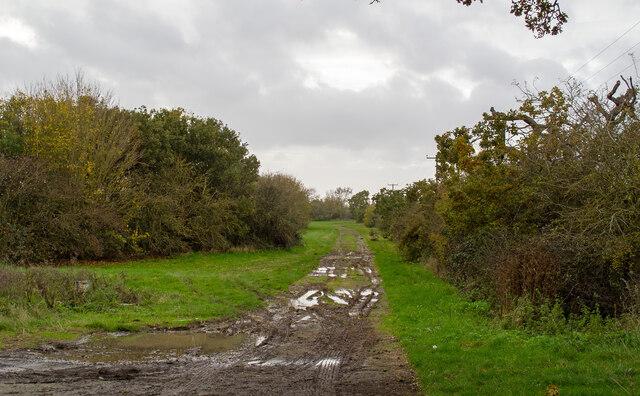 Farm track, off Little Warley Hall Lane