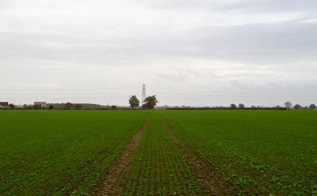 Footpath over arable land, near Tillingham Hall, West Horndon