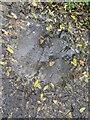 TF0820 : Raindrops by Bob Harvey