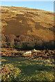 NT9617 : Linhope Burn valley by Derek Harper