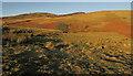 NT9517 : Moorland near Linhope Spout by Derek Harper