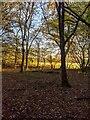 TF0820 : Woodland edge by Bob Harvey