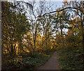TF0820 : Autumnal woodland by Bob Harvey